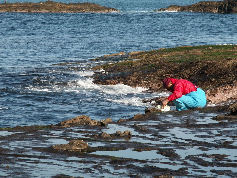 岩のり漁の漁師さん
