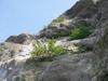 烏帽子本島の植生