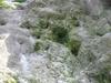 本島の表面